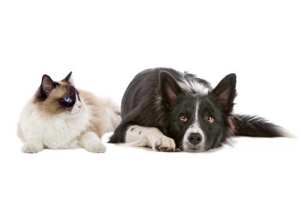 dana point movers pets tips