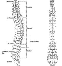 how common is spinal fusion surgery exercises for injuries spine and pelvis diagram pelvic spine [ 938 x 1238 Pixel ]