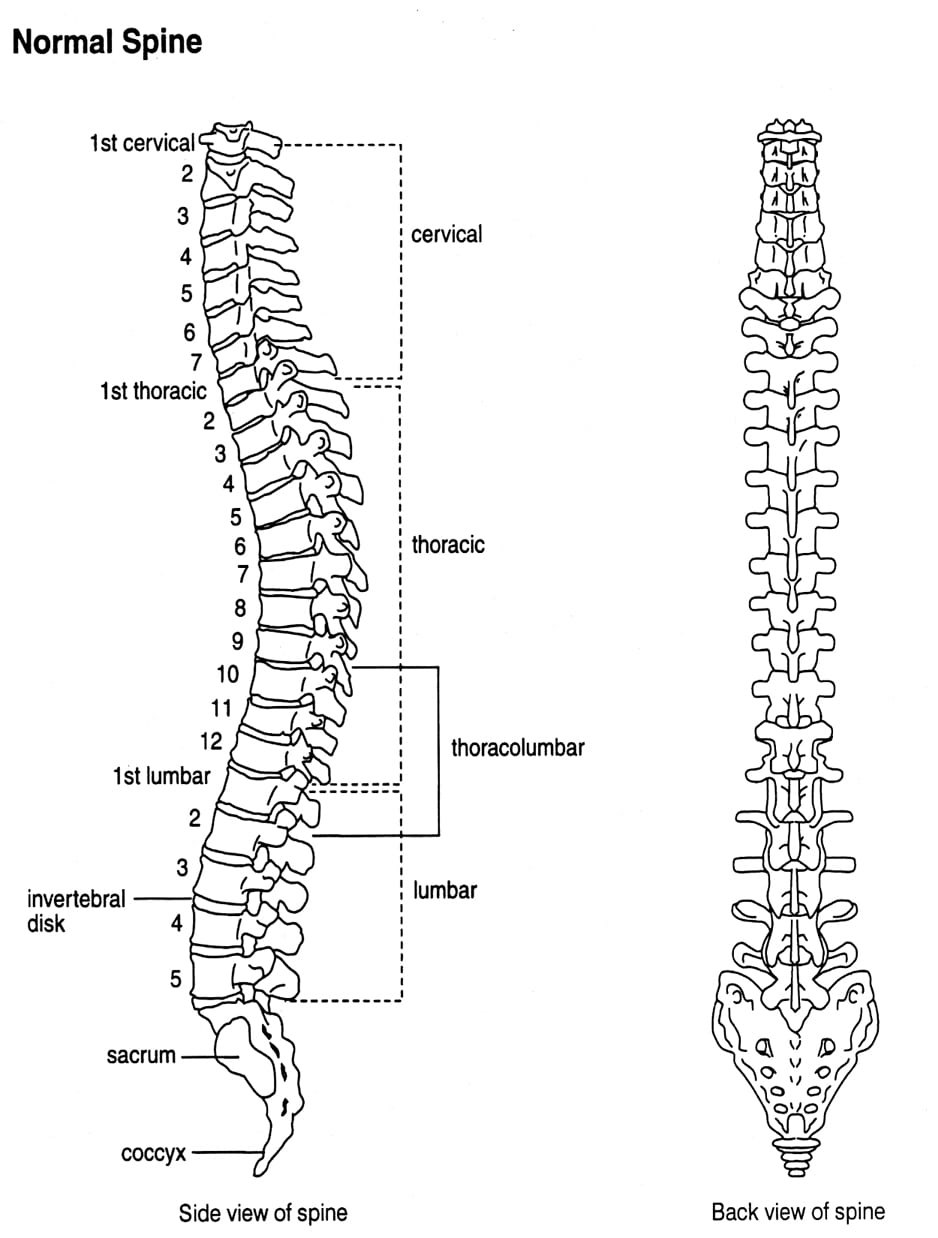 hight resolution of how common is spinal fusion surgery exercises for injuries spine and pelvis diagram pelvic spine