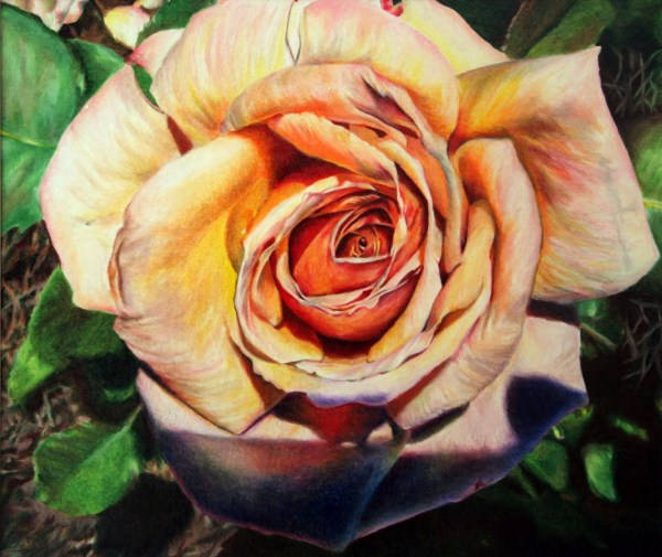 Beautiful Color Pencil Flower Drawing