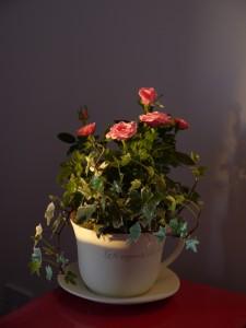 Flowers from my best friend