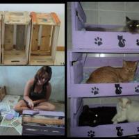 Litera para gatos con cajas de frutas
