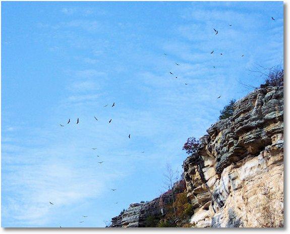birds soaring at bluffs over buffalo national river
