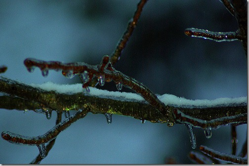 ice_coating_on_tree