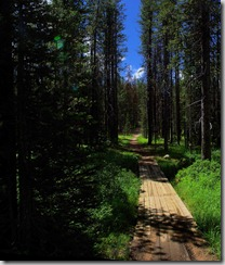 trail by Martin Lake next to Bull Creek Campground