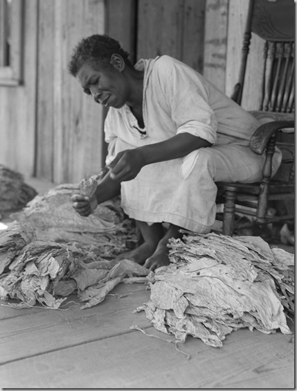 Georgia sharecropper sorts tobacco.