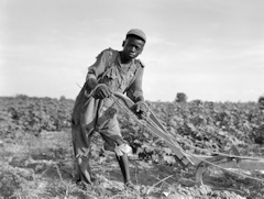 Thirteen-year old sharecropper boy