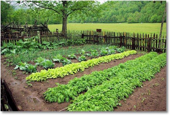 Garden At Mountain Farm Museum