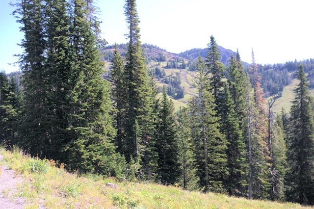 Dunraven Pass, Yellowstone National Park, Wyoming, August 15, 2014