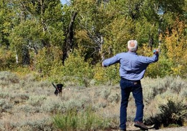 Man throwing ball with dog off leash, against the rules, Grand Teton National Park