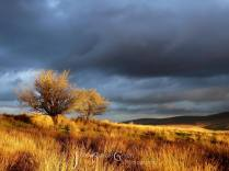 1708-julia-amies-green-dramatic-light-on-the-moor-during-sunset-in-stormy-weather