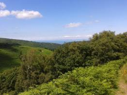 241-mandy-stribling-circular-walk-on-exmoor-in-horner-wood