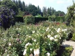RHS Rosemoor Rose Garden