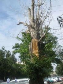 23. a tree