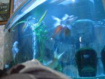 16. aquarium