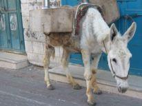 10. a donkey