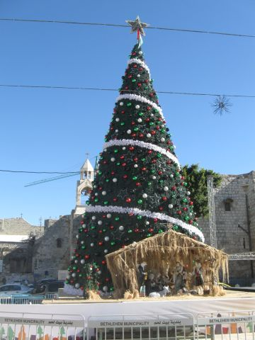 01. Christmas tree in Bethlehem