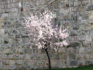 01. spring