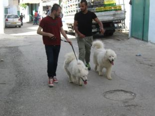 02. dogs in Azza camp