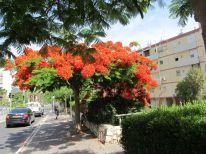10. a flourishing tree in Haifa
