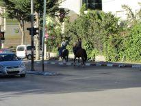 30. horse traffic