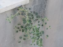 19. greening concrete