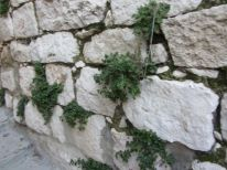 08-plants-growing-out-off-the-wall