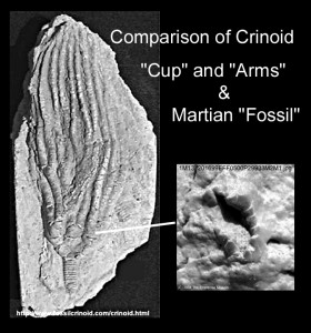 NASA ordered immediate destruction of this possible fossil of a crinoid in 20014. Photo Credit: Enterprise Mission.