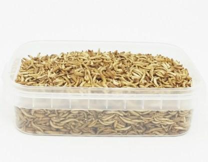 essbare Buffalowürmer 30g, Dose offen
