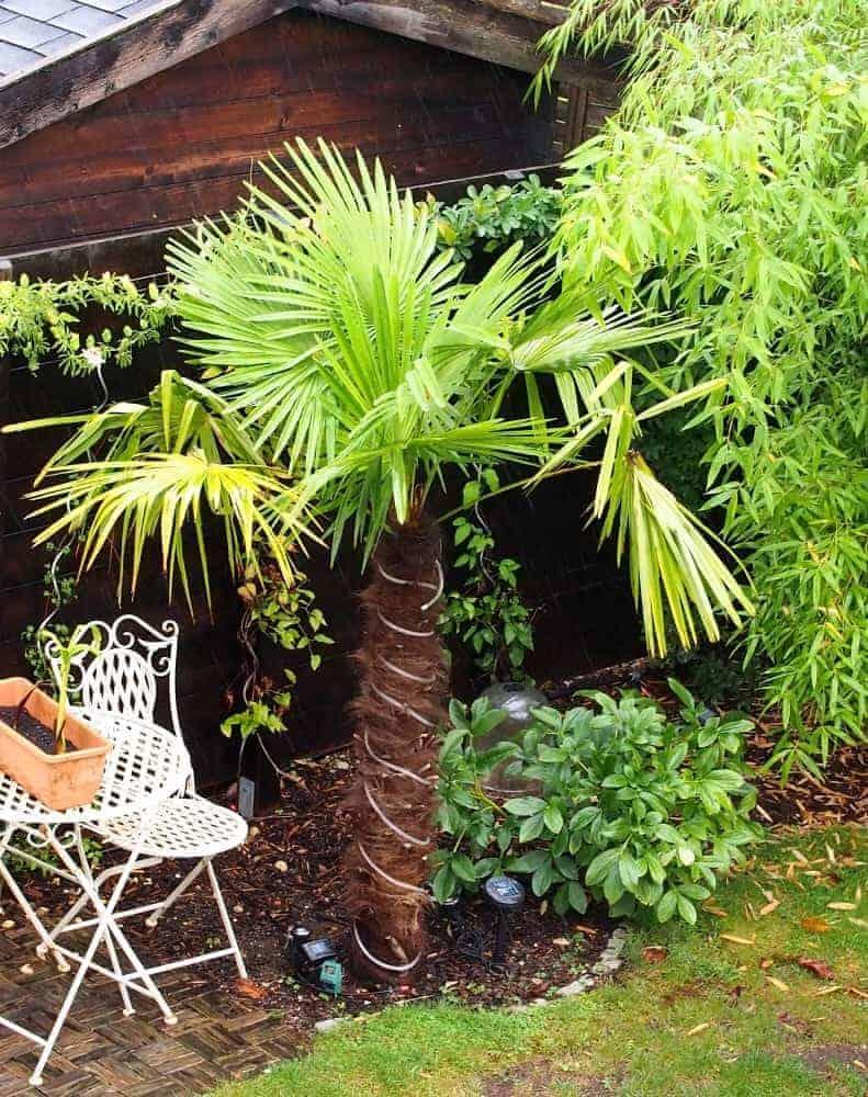 Palme Für Drinnen winterschutz gestell palmen winterschutz de der exotengärtner