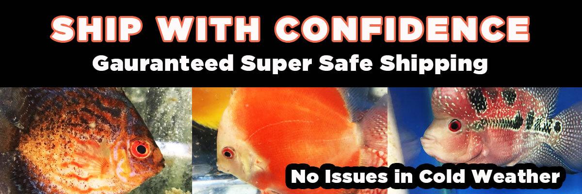 Freshwater fish banner 2
