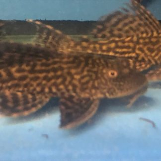 Exotic Fish Shop | We sell the highest quality freshwater fish