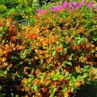 Flowers of Bequia_04