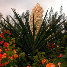Flowers of Bequia_10