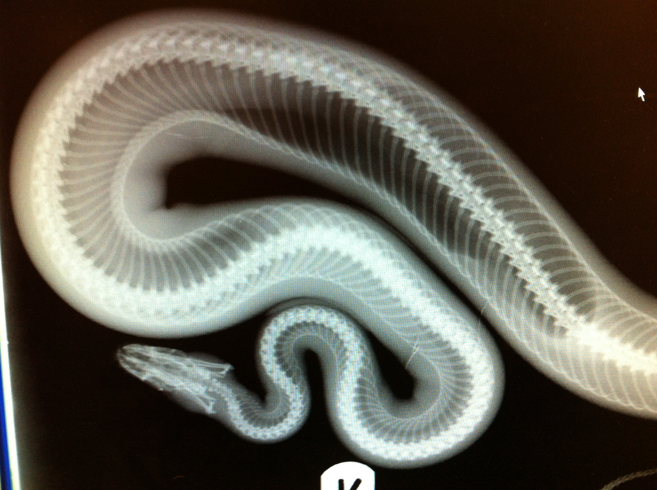 Respiratory Conditions In Reptiles The Exotic Pet Vet Blog