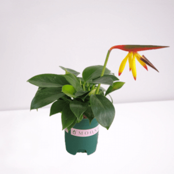 Philodendrone artificial flower