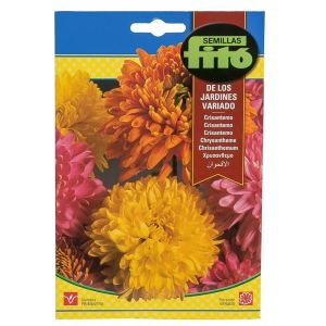 Fito Chrysanthemum Flower Seeds