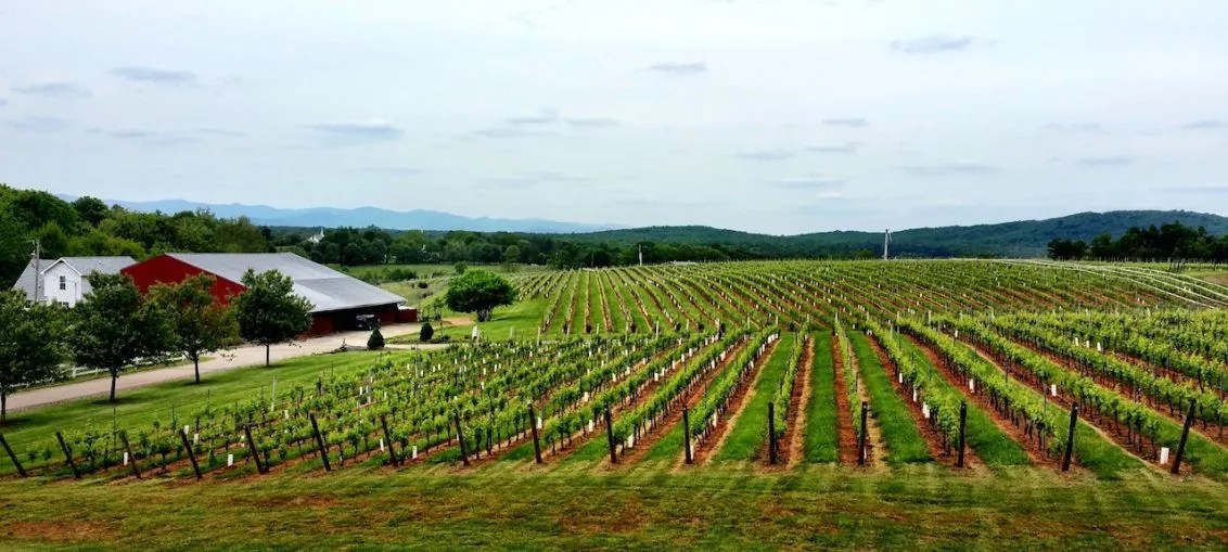 vineyard virginia usa american wine cult wine travel wine tourism