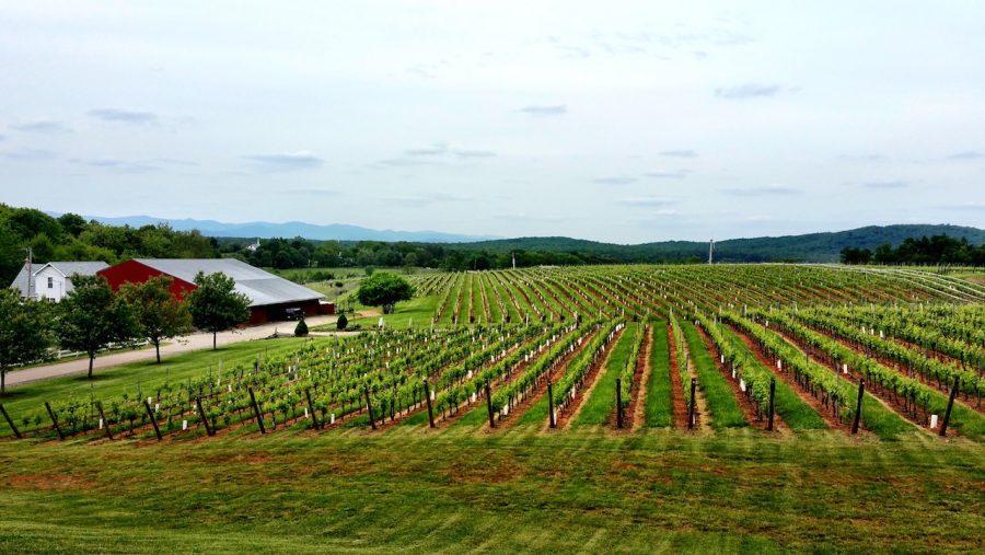 vineyard virginia usa american wine cult wine travel wine tourism