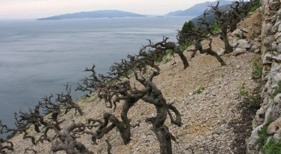 peljesac vineyard croatian wine