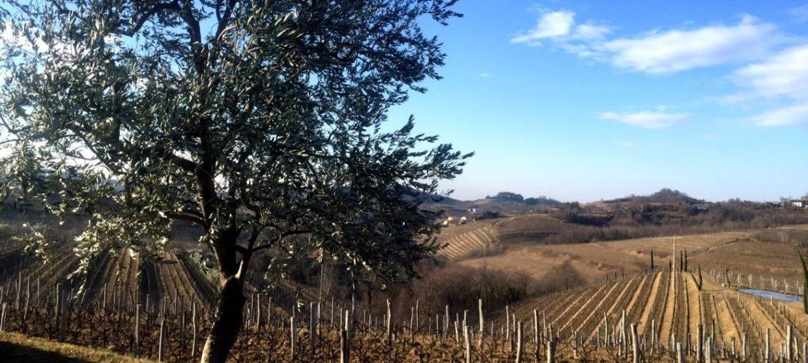Gravner Vineyard Friuli