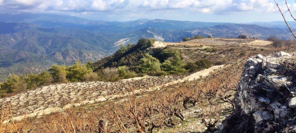 Cypriot Vineyard