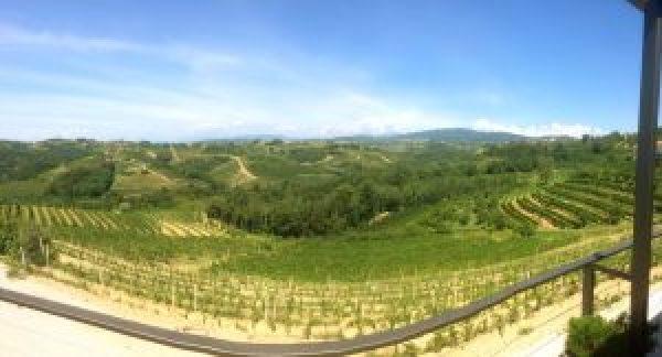 Jakoncic Vineyards