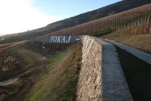 Tokaj Vineyard 4