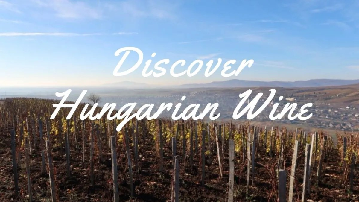 discover_hungarian_wine_guide