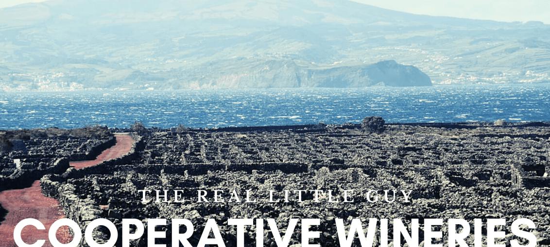cooperative wineries