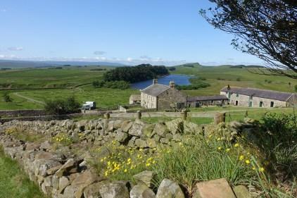 Sheep farm adjacent to Hadrian's Wall