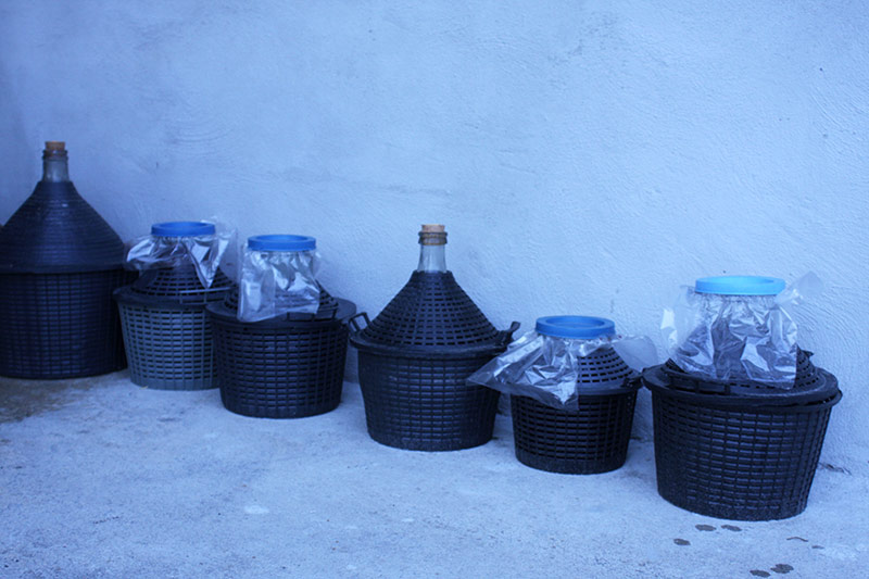 Barrels of fruity rakija