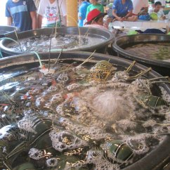 Hotels With Kitchens In Waikiki Wallpaper For Kitchen Walls Crabbing & General Beach Fun – Boracay 2013 | The ...