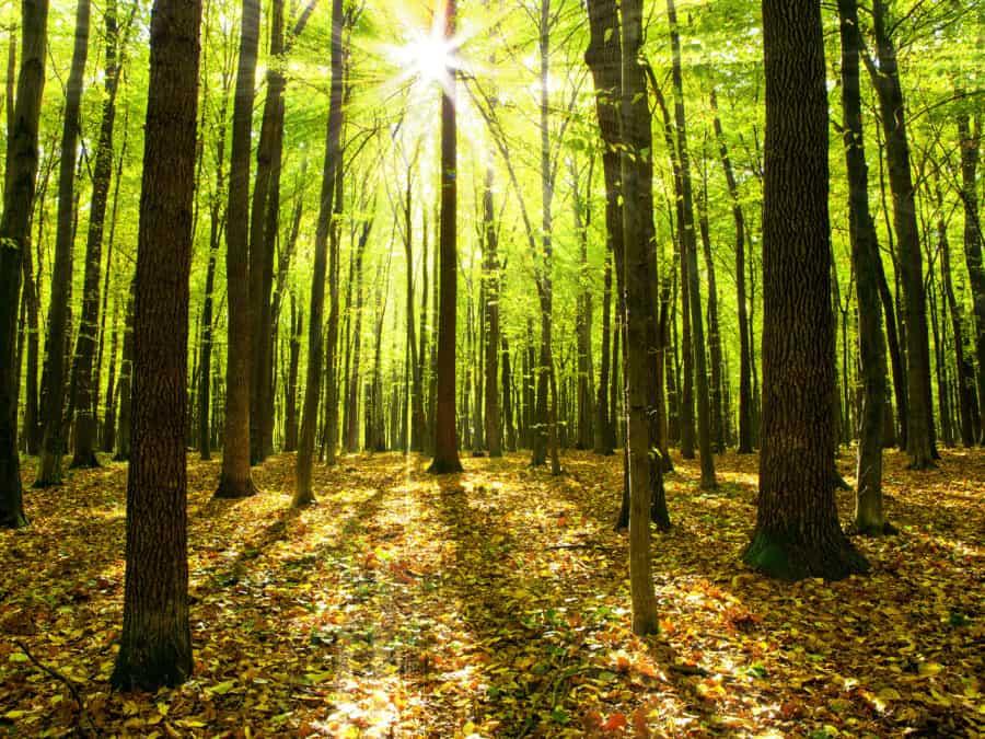 Teak-Hardwoods-Plantation